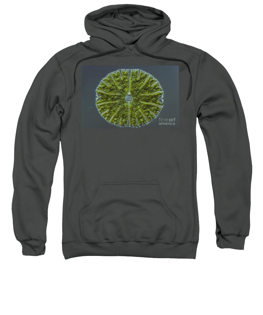 Science Sweatshirt featuring the photograph Micrasterias Sp. Algae Lm by M. I. Walker