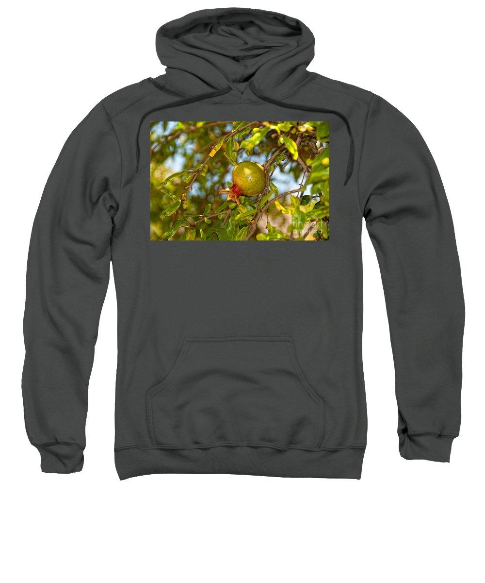 California Sweatshirt featuring the digital art Old Town San Diego by Carol Ailles