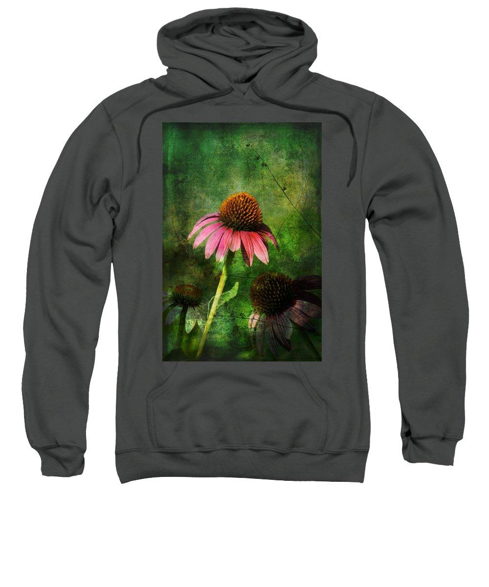 Coneflower Sweatshirt featuring the photograph 3 Amigos Echinacea Coneflower Grunge Art by Kathy Clark
