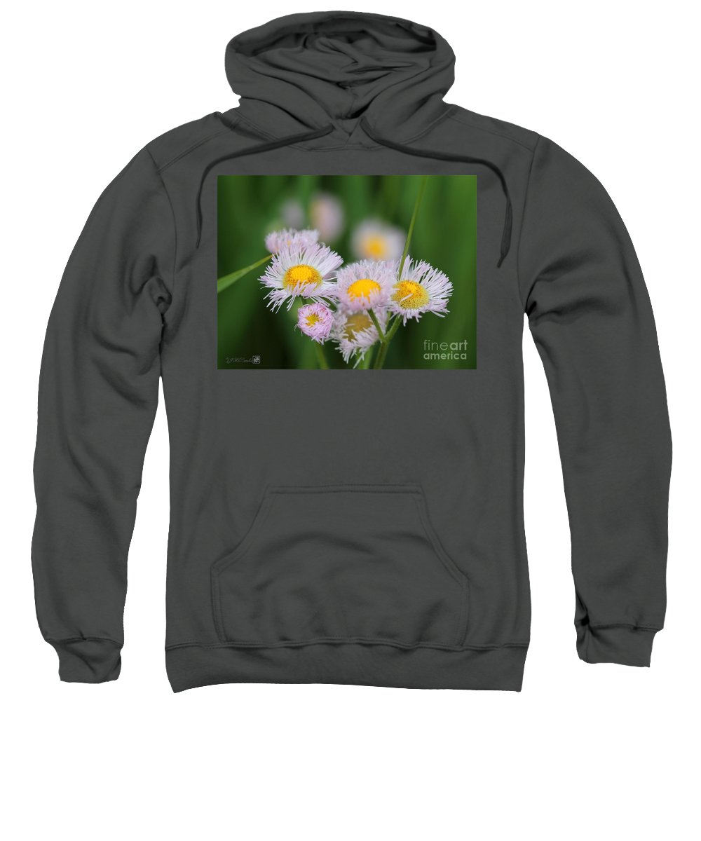 Wildflower Sweatshirt featuring the photograph Wildflower Named Robin's Plantain by J McCombie