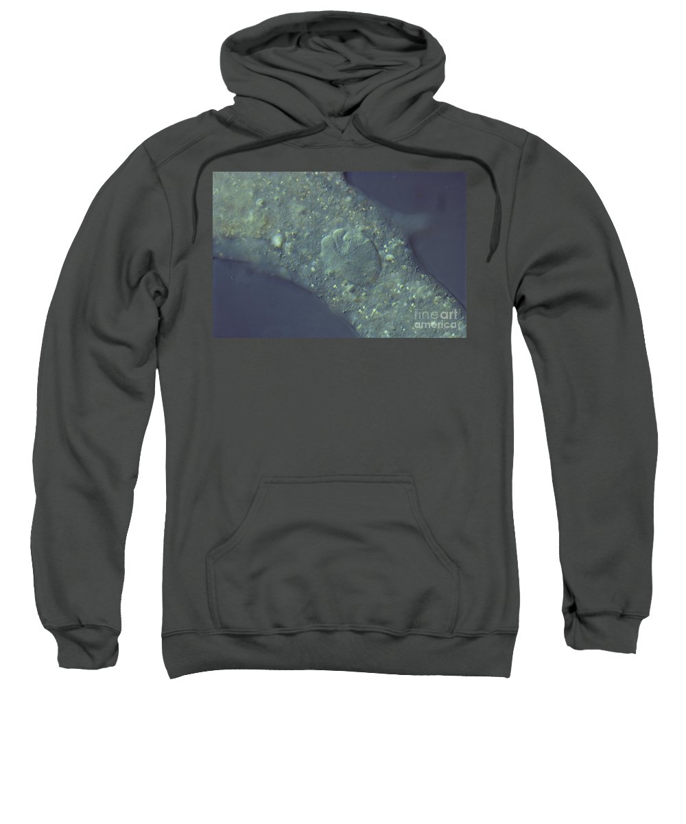 Science Sweatshirt featuring the photograph Amoeba Proteus Lm by M. I. Walker