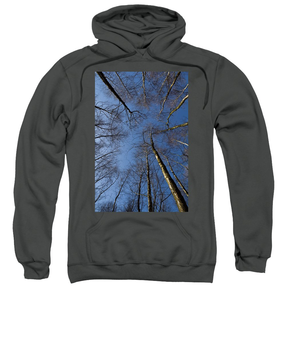 Epping Sweatshirt featuring the photograph Epping Forest Trees by David Pyatt