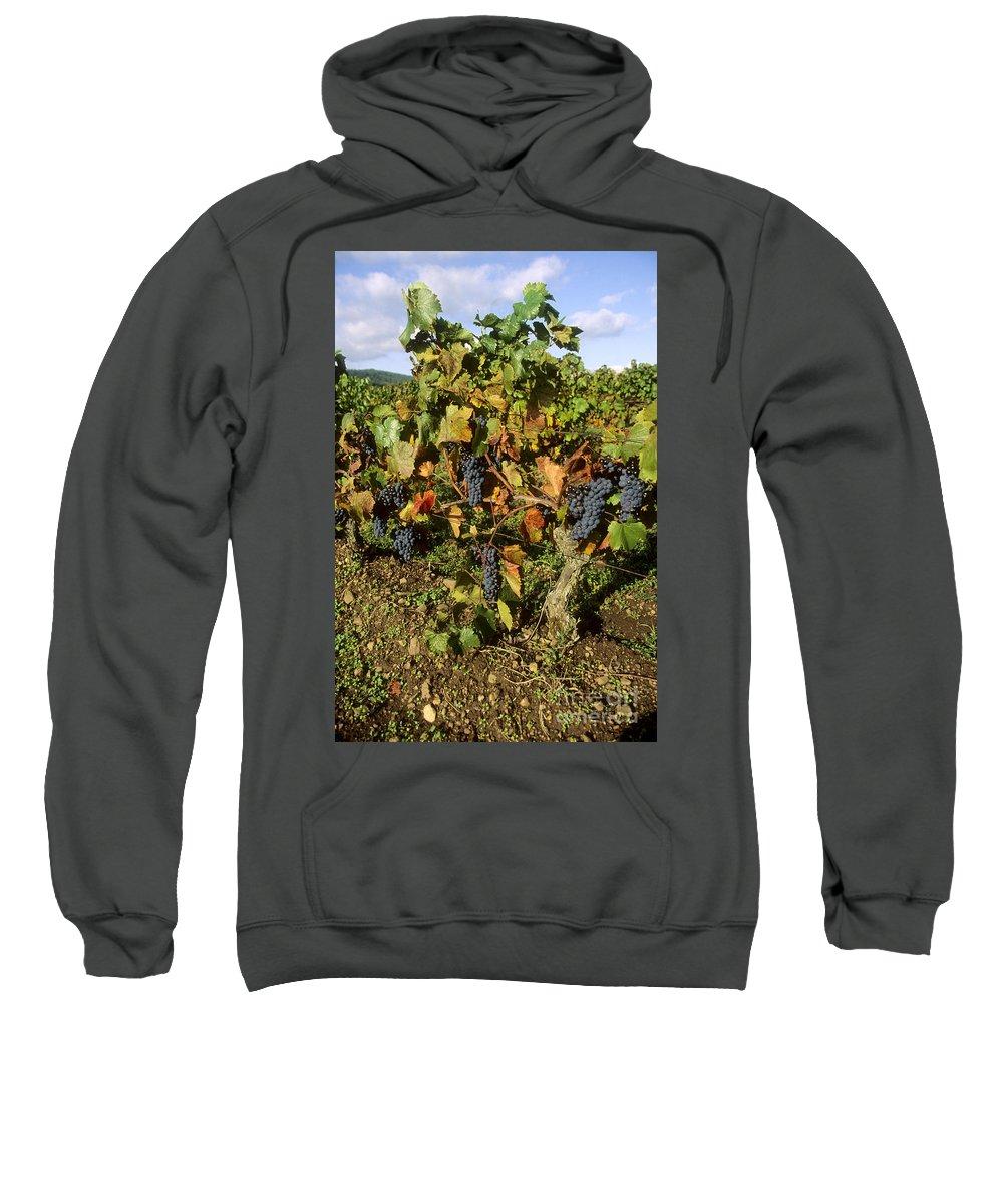 Winegrowing Sweatshirt featuring the photograph Grapes Growing On Vine by Bernard Jaubert