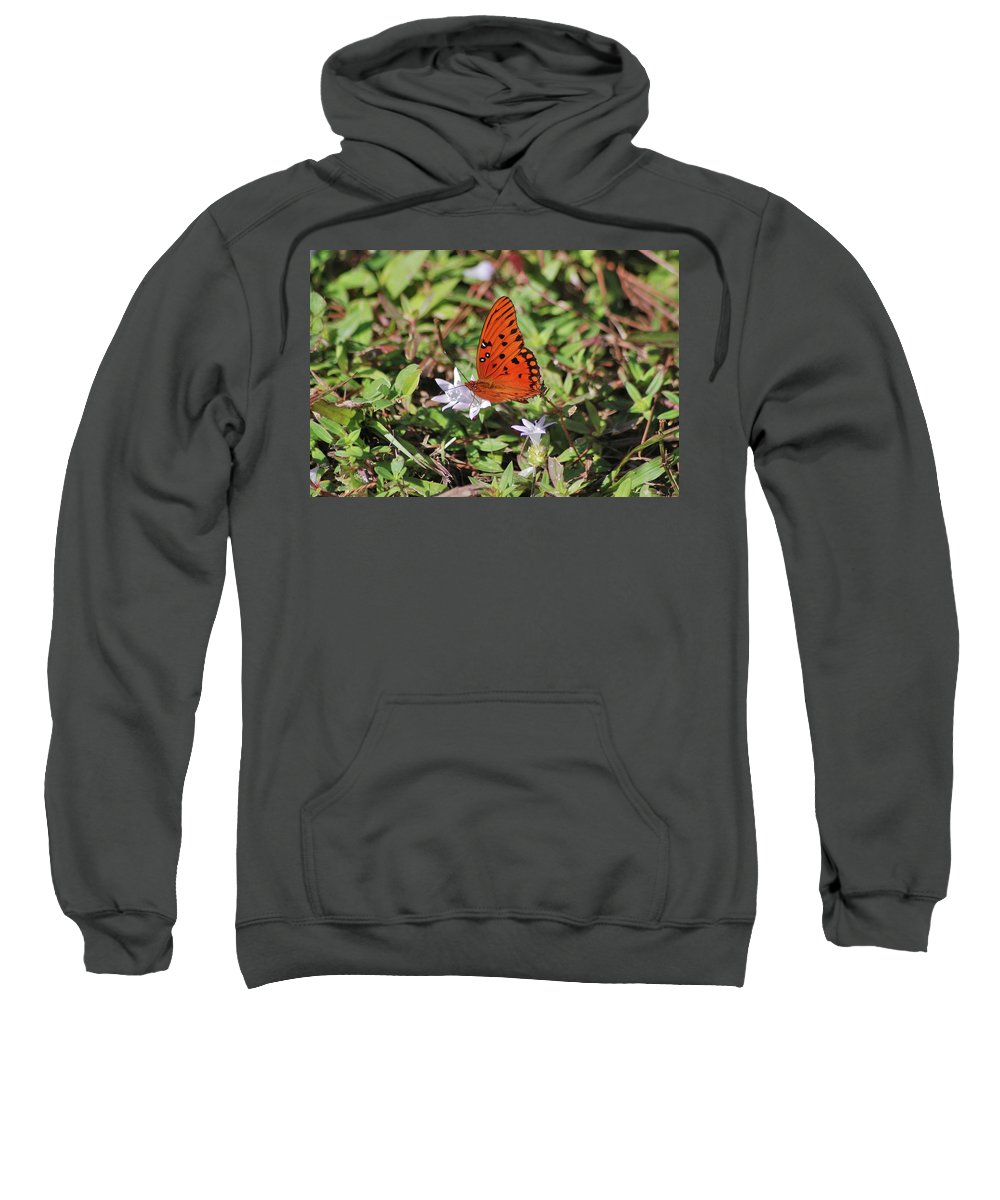 Fritillary Butterfly Sweatshirt featuring the photograph 42- Fritillary Butterfly by Joseph Keane