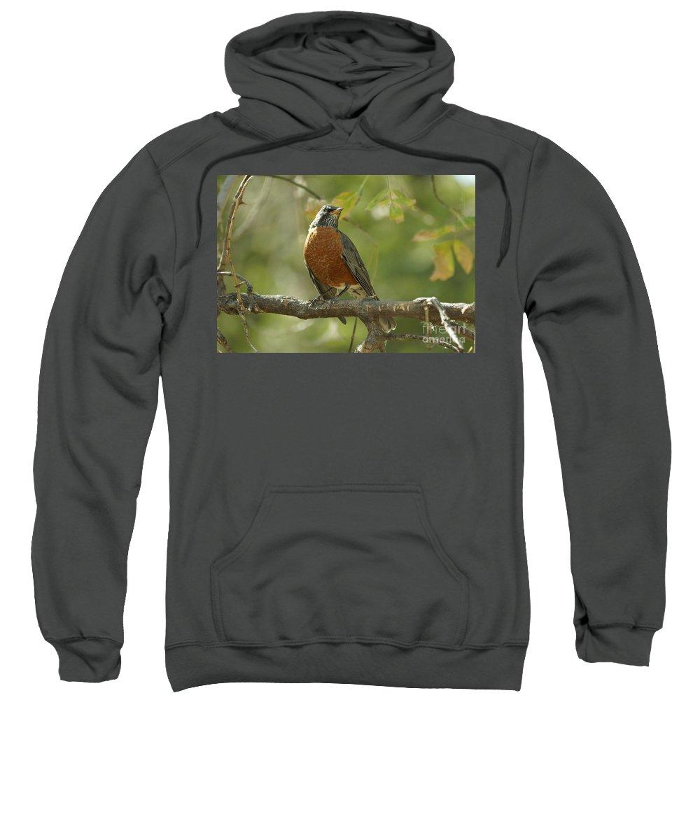 Birds Sweatshirt featuring the photograph Robin by Lori Tordsen
