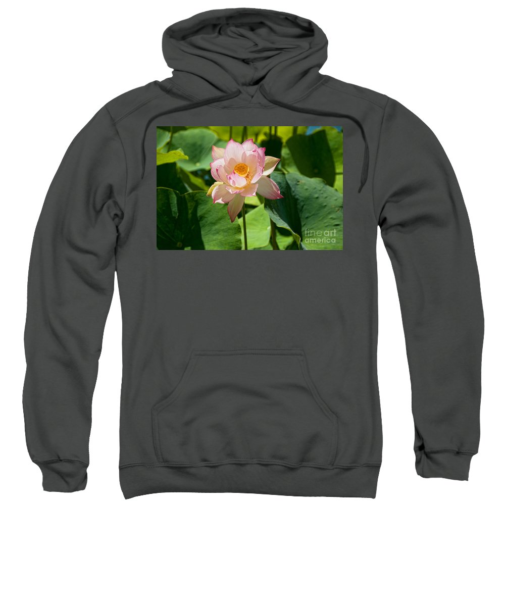 Balboa Park Sweatshirt featuring the digital art Balboa Park San Diego by Carol Ailles