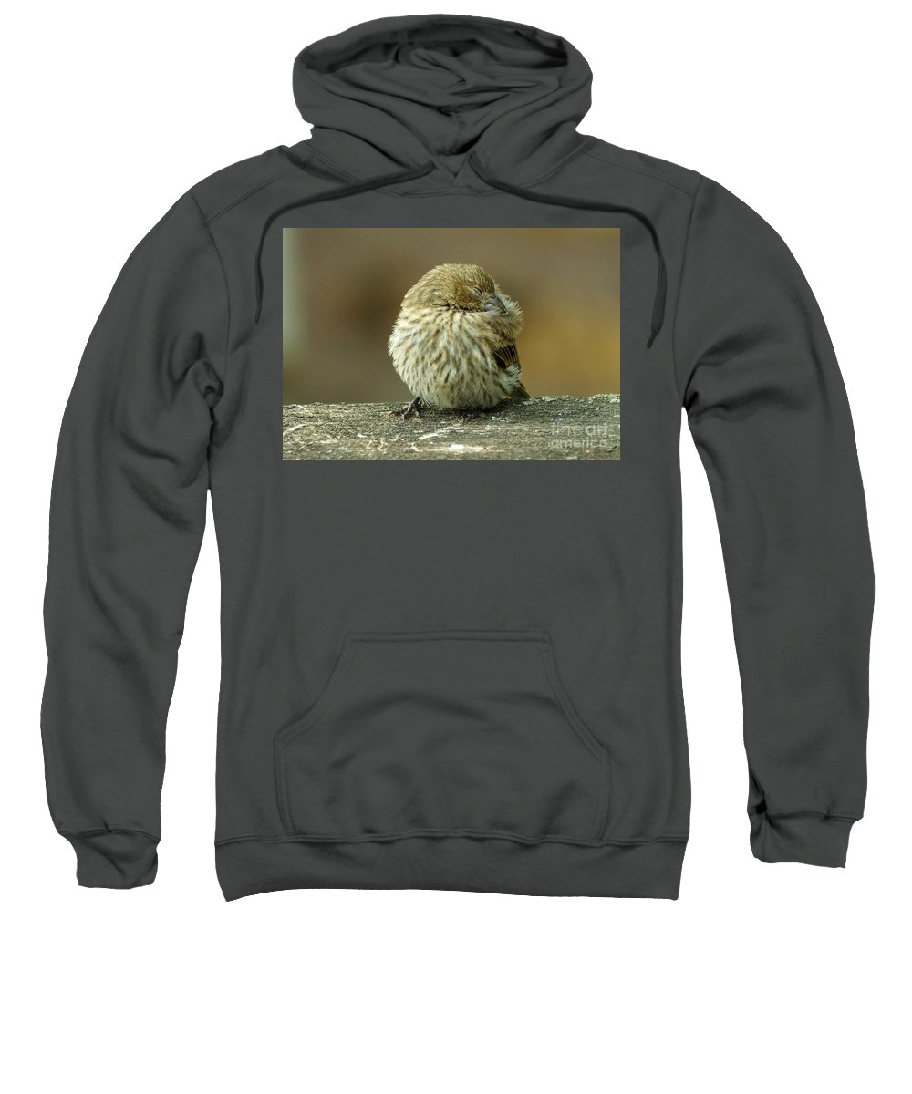 House Finch Sweatshirt featuring the photograph House Finch by Lori Tordsen