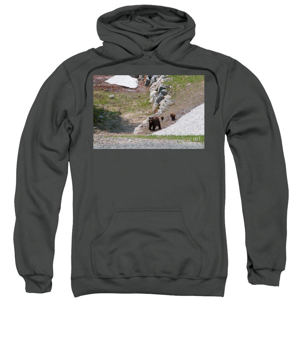 Animals Sweatshirt featuring the digital art Black Bear Family by Carol Ailles