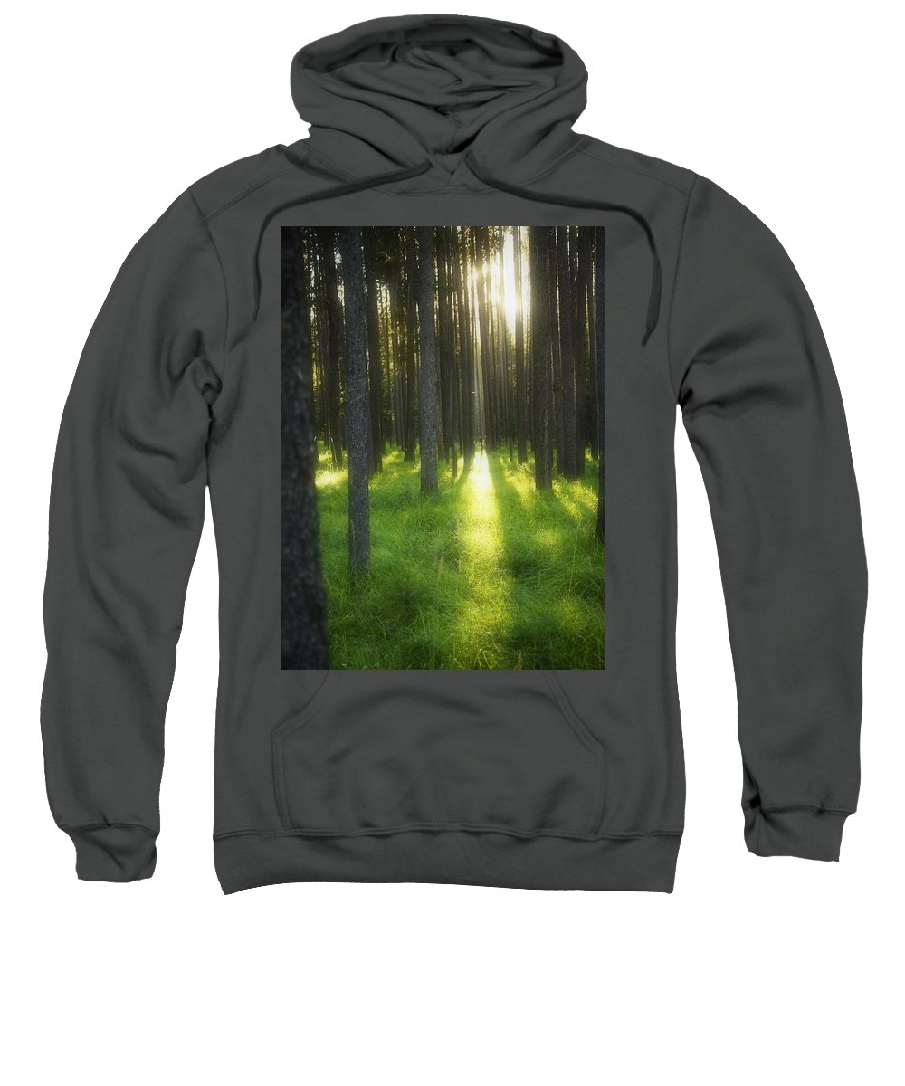 Banff Sweatshirt featuring the photograph A Beautiful Wooded Area by Kelly Redinger