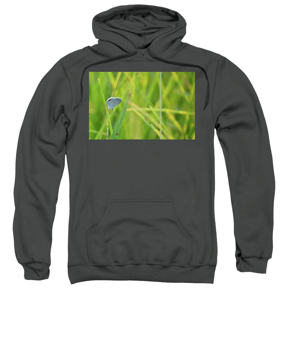 Eastern Tailed Blue Sweatshirt featuring the photograph A Blue And Grass by JD Grimes