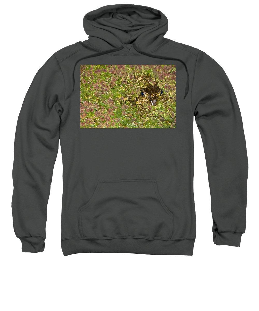 American Sweatshirt featuring the photograph A Bullfrog Rana Catesbeiana Hiding by Jack Goldfarb