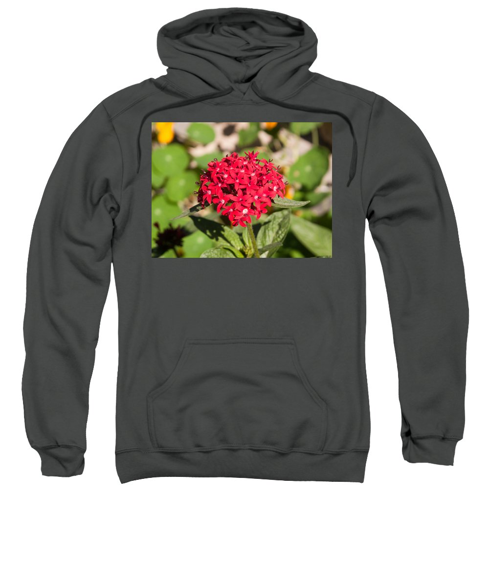Red Sweatshirt featuring the photograph A Bunch Of Small Red Flowers by Ashish Agarwal