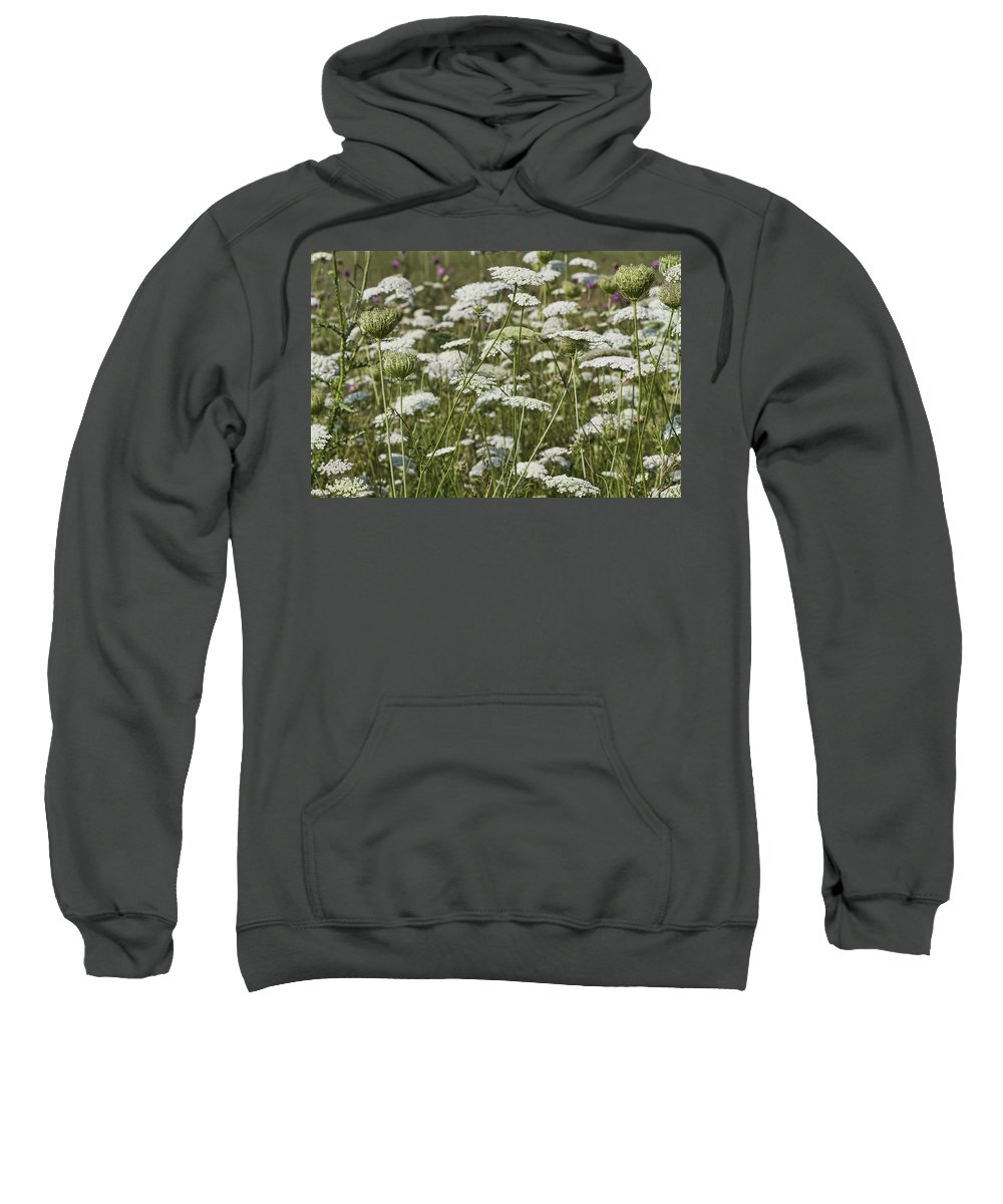 Daucus Carota Sweatshirt featuring the photograph A Field Of Queen Annes Lace by Kathy Clark
