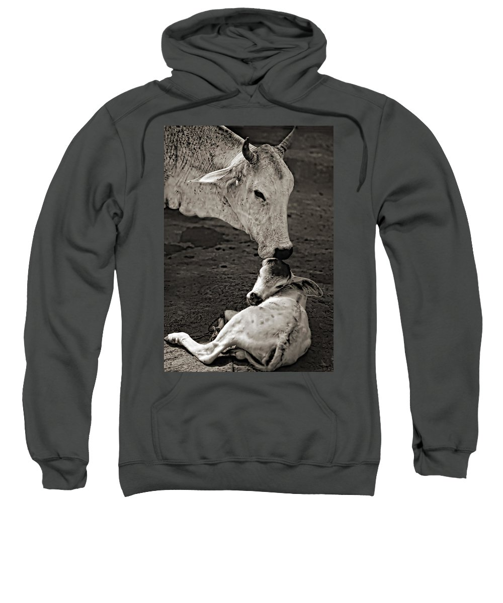 Cow Sweatshirt featuring the photograph A Mother's Love Monochrome by Steve Harrington