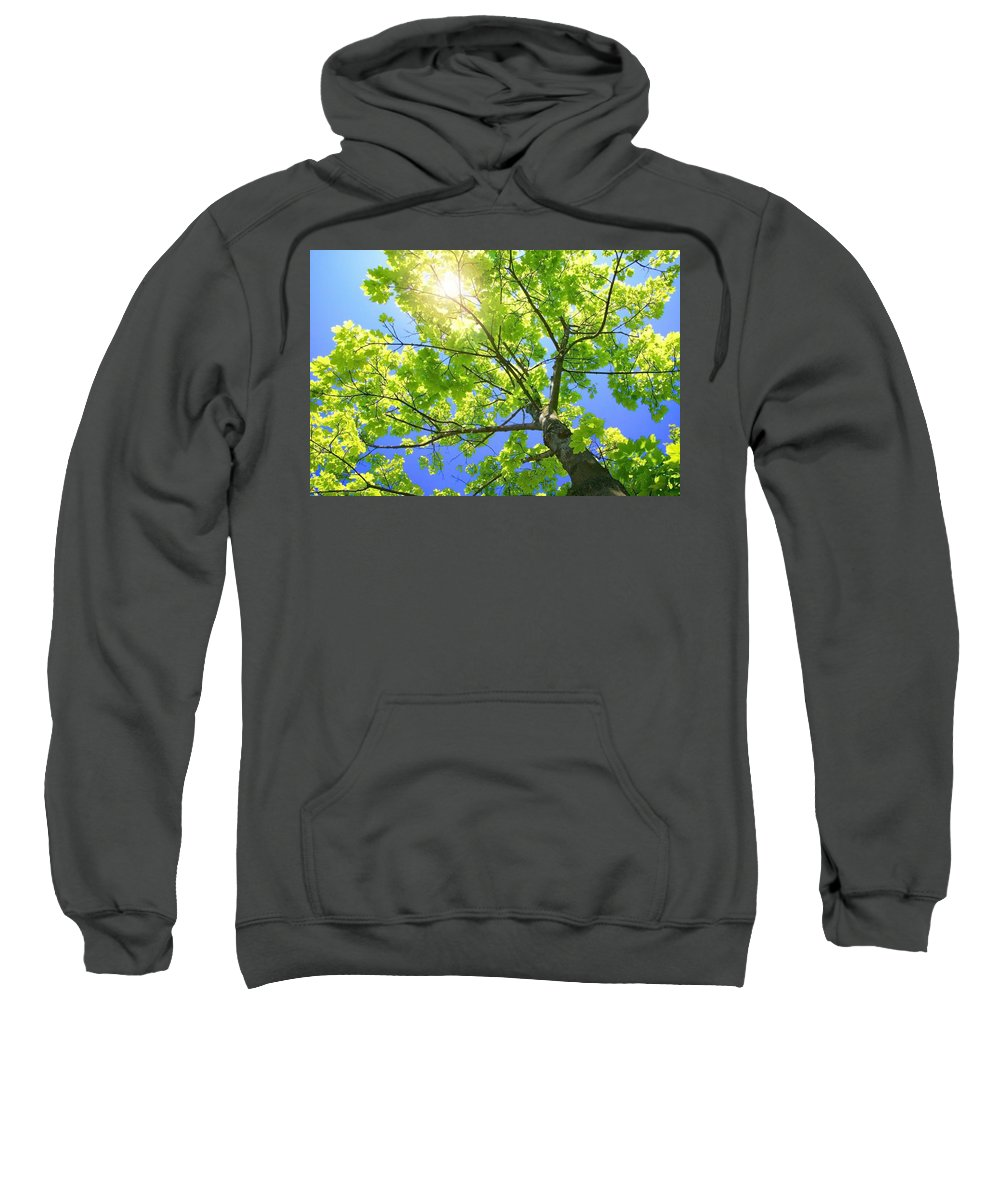 Branches Sweatshirt featuring the photograph A Tall Tree by Don Hammond