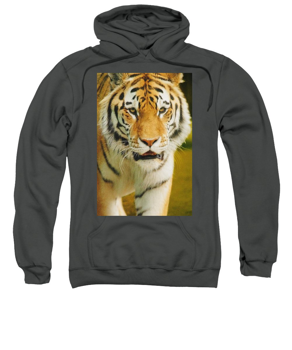 Outdoors Sweatshirt featuring the photograph A Tiger by Don Hammond