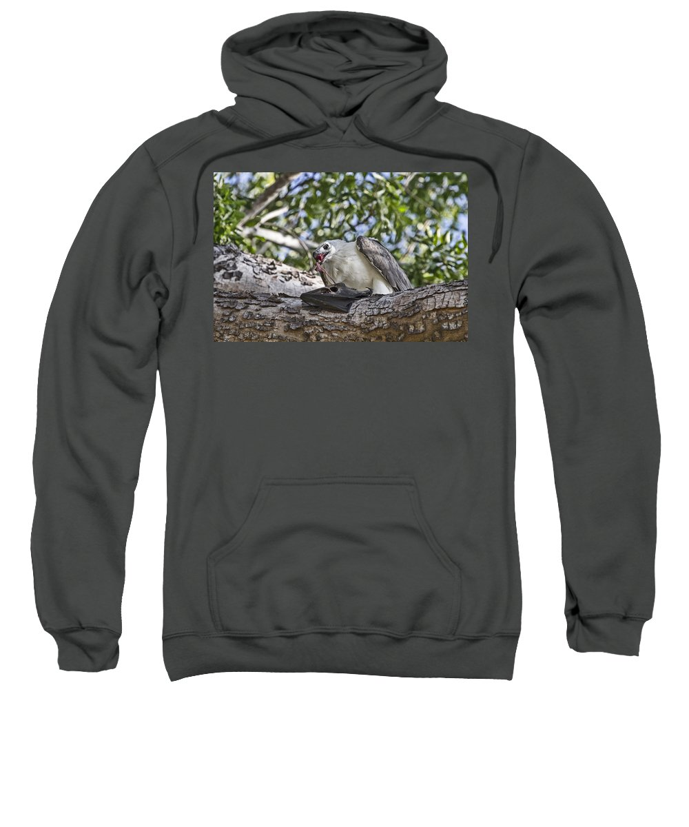 Sea Eagle Sweatshirt featuring the photograph A Time For Everything V3 by Douglas Barnard