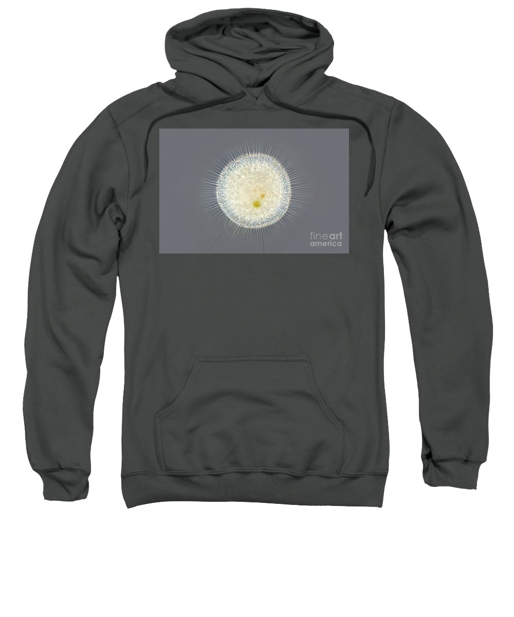 Light Microscopy Sweatshirt featuring the photograph Actinosphaerium, Phase Contrast by M. I. Walker