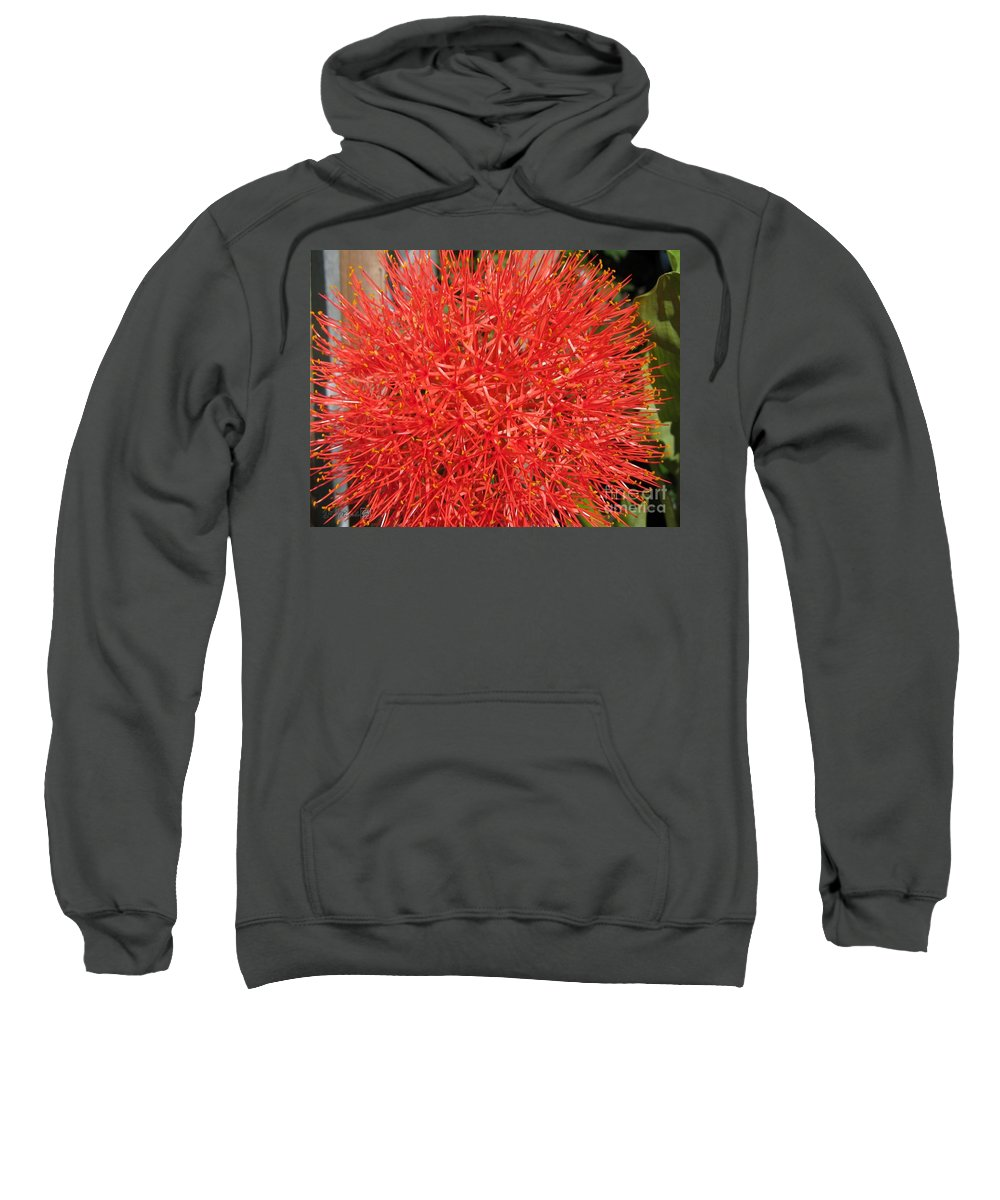 African Blood Lily Sweatshirt featuring the photograph African Blood Lily Or Fireball Lily by J McCombie