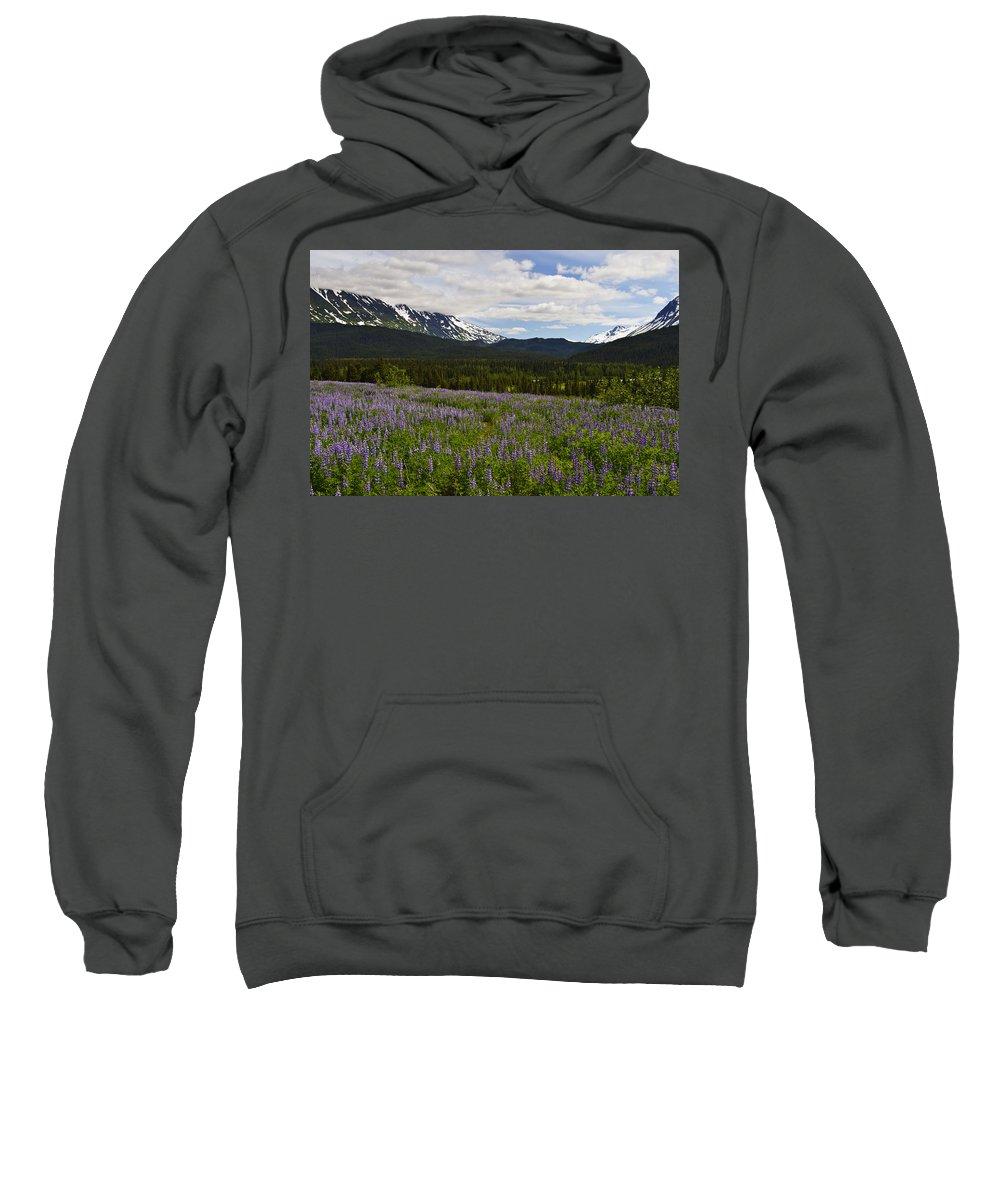 Alaska Lupine Sweatshirt featuring the photograph Alaska Lupine by Wes and Dotty Weber