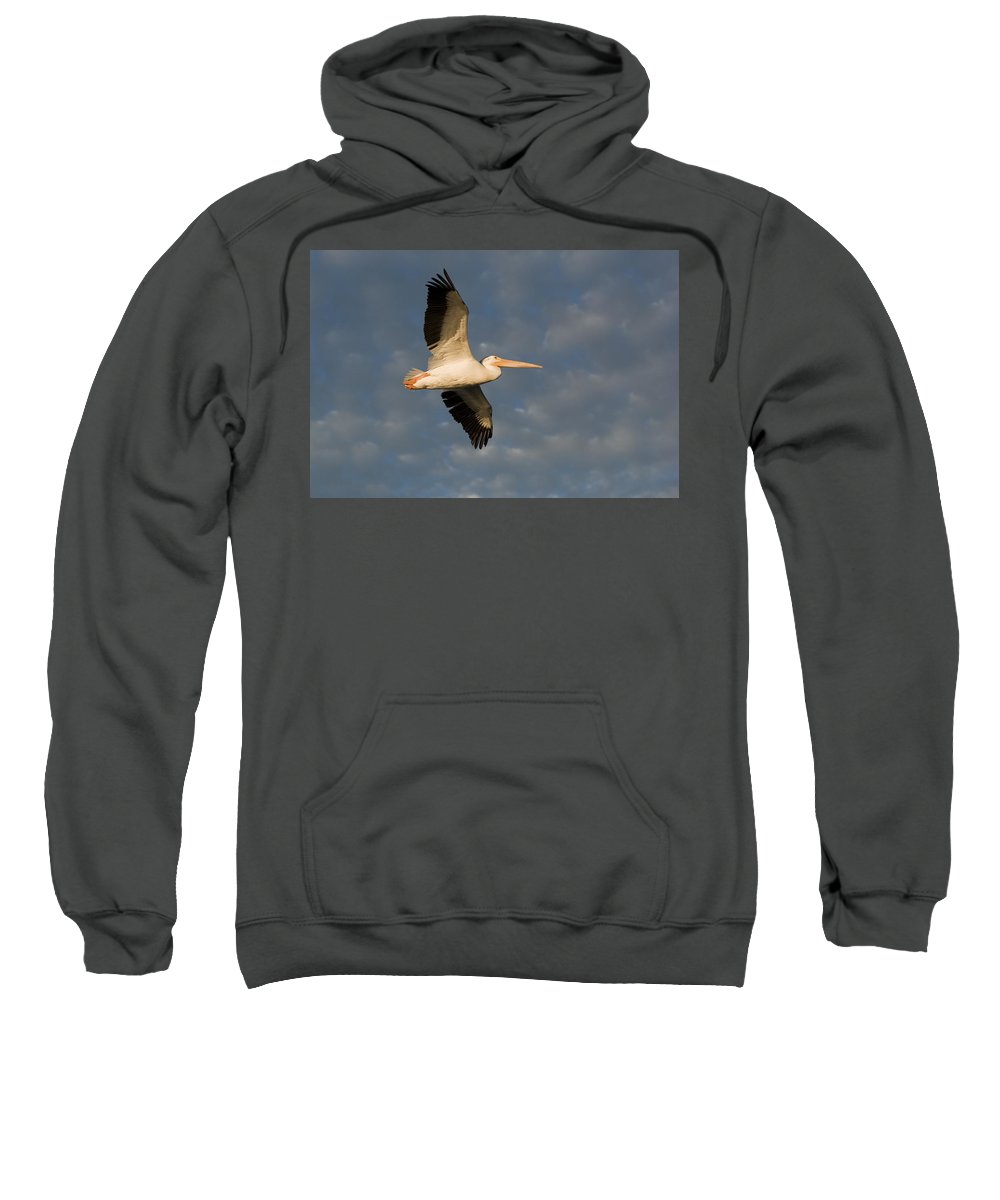 Pelican Sweatshirt featuring the photograph American White Pelican Pelecanus by Keith Levit