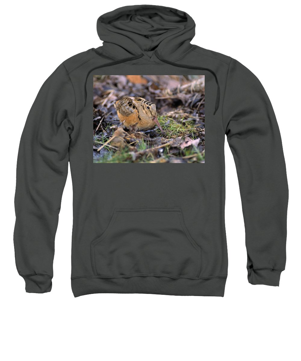 Outdoors Sweatshirt featuring the photograph American Woodcock Bird by Natural Selection Bill Byrne
