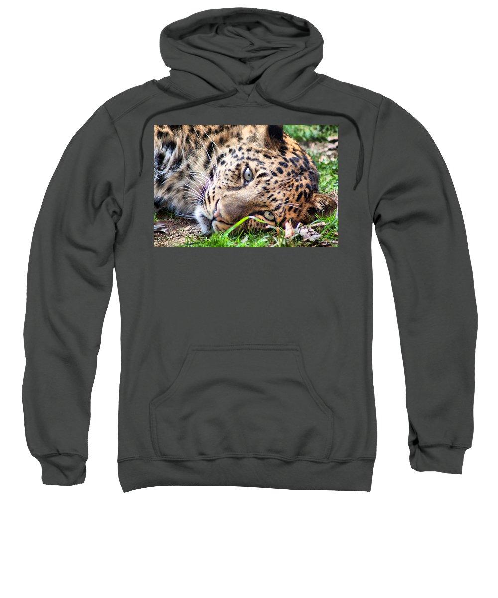 Leopard Sweatshirt featuring the photograph Amur Leopard by Lynne Jenkins