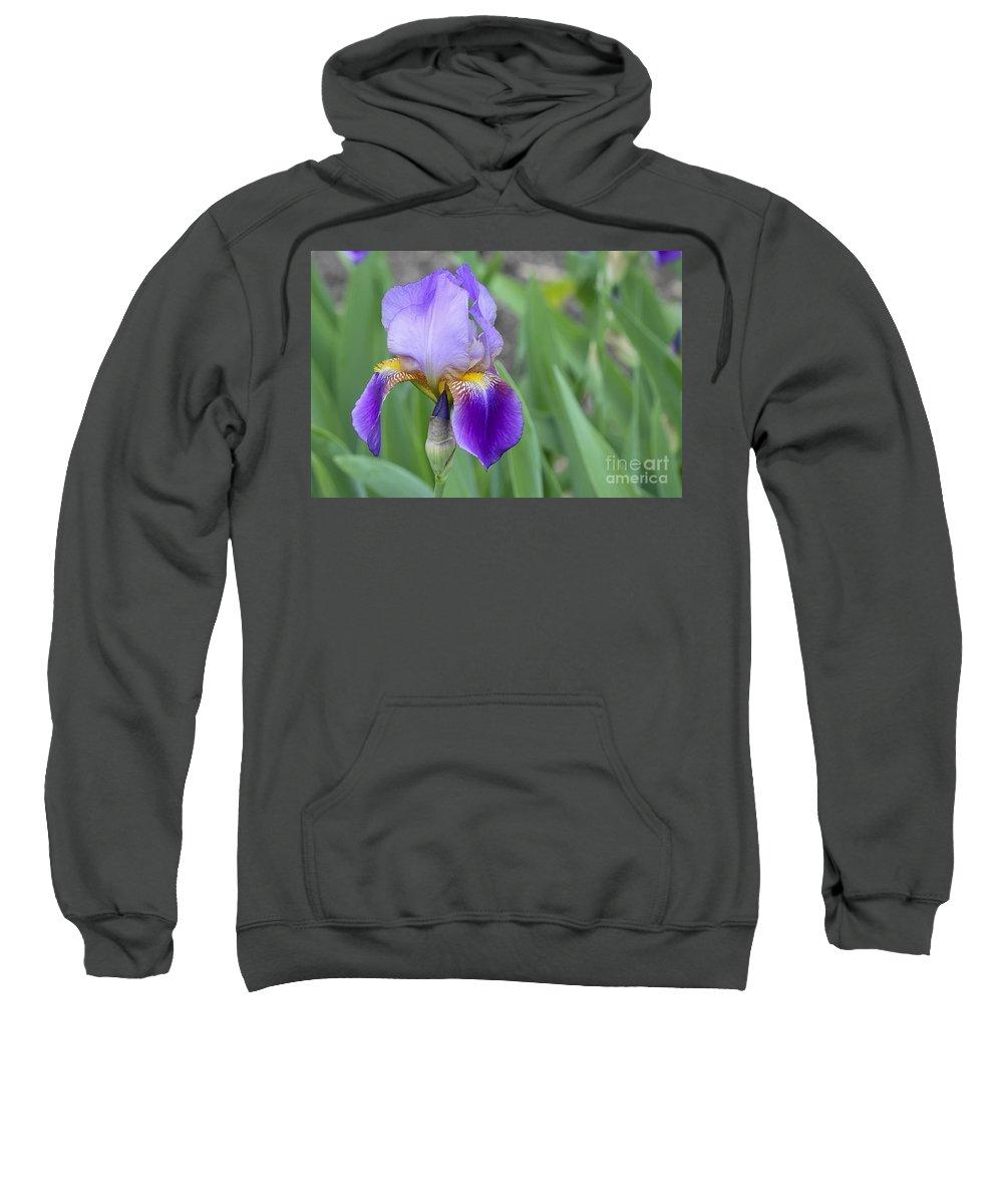 Flower Sweatshirt featuring the photograph An Iris Blossom by Teresa Zieba