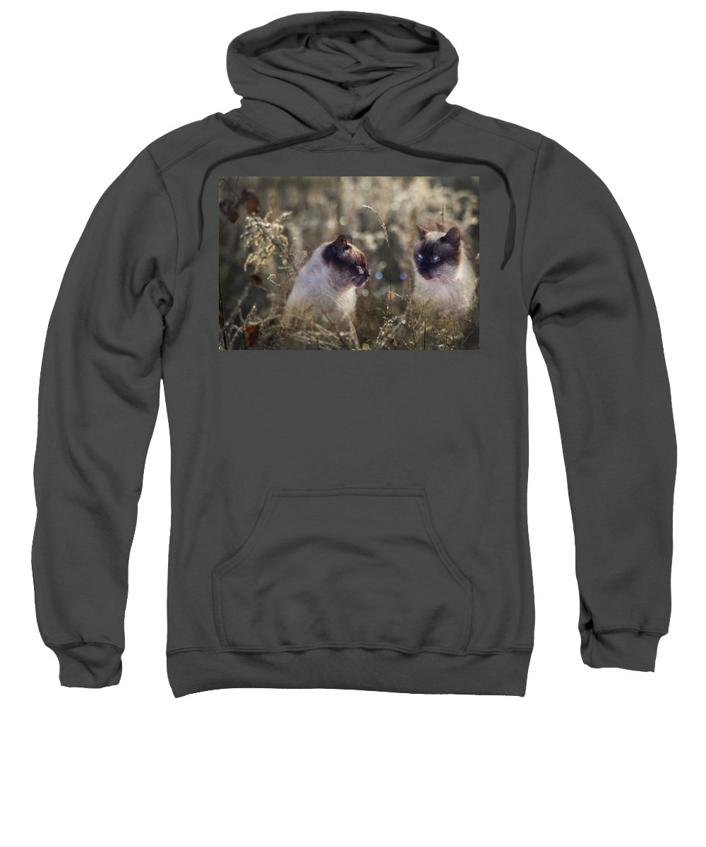Siamese Sweatshirt featuring the photograph Are You Dreaming About Me - Siamese Feral Cat by Kathy Clark