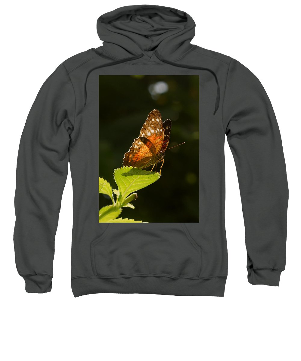 Butterfly Sweatshirt featuring the photograph Are You Looking At Me? by Sumi Martin