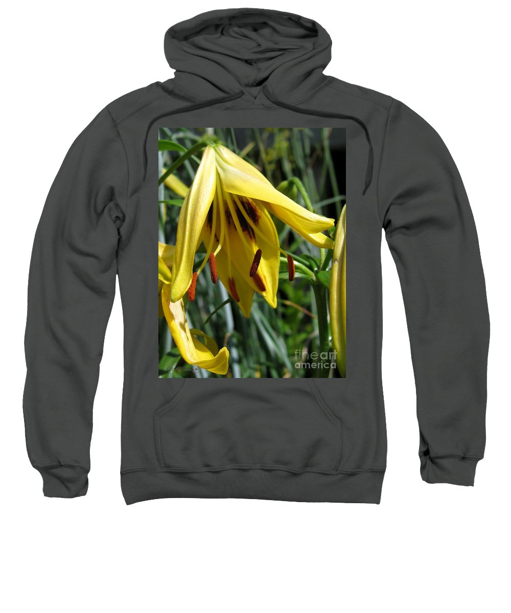 Asiatic Lily Sweatshirt featuring the photograph Asiatic Lily Named Black-eyed Cindy by J McCombie