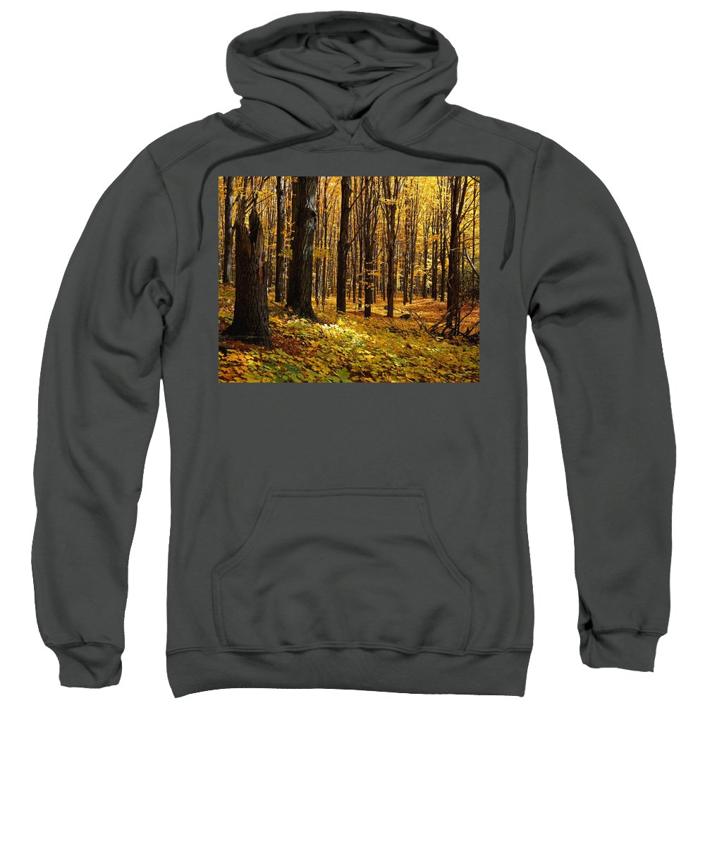 Autumn Colors Sweatshirt featuring the photograph Autumn Forest by Natural Selection David Chapman