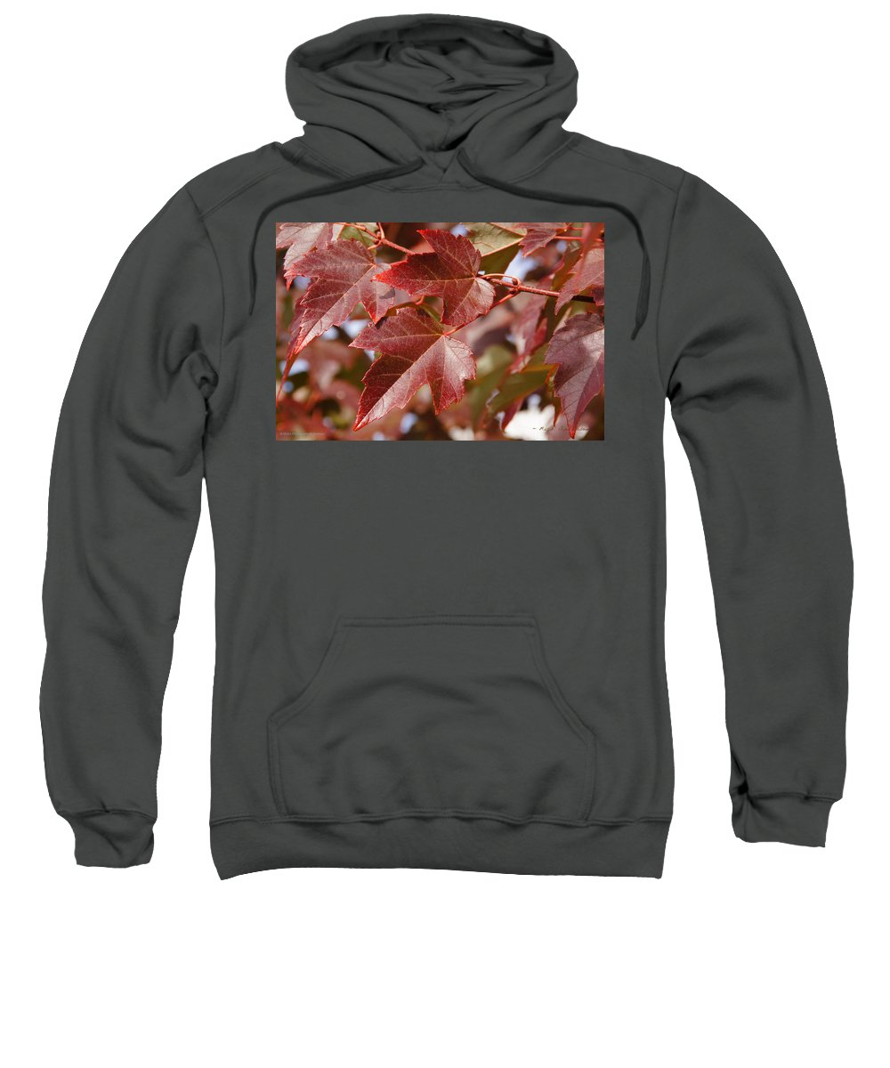 Red Sweatshirt featuring the photograph Autumn In My Back Yard by Mick Anderson