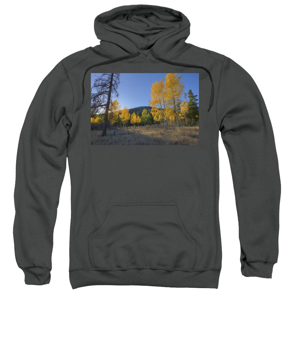 Autumn Sweatshirt featuring the photograph Autumn Sunset In Forest Of Golden Aspen by Dan Jurak