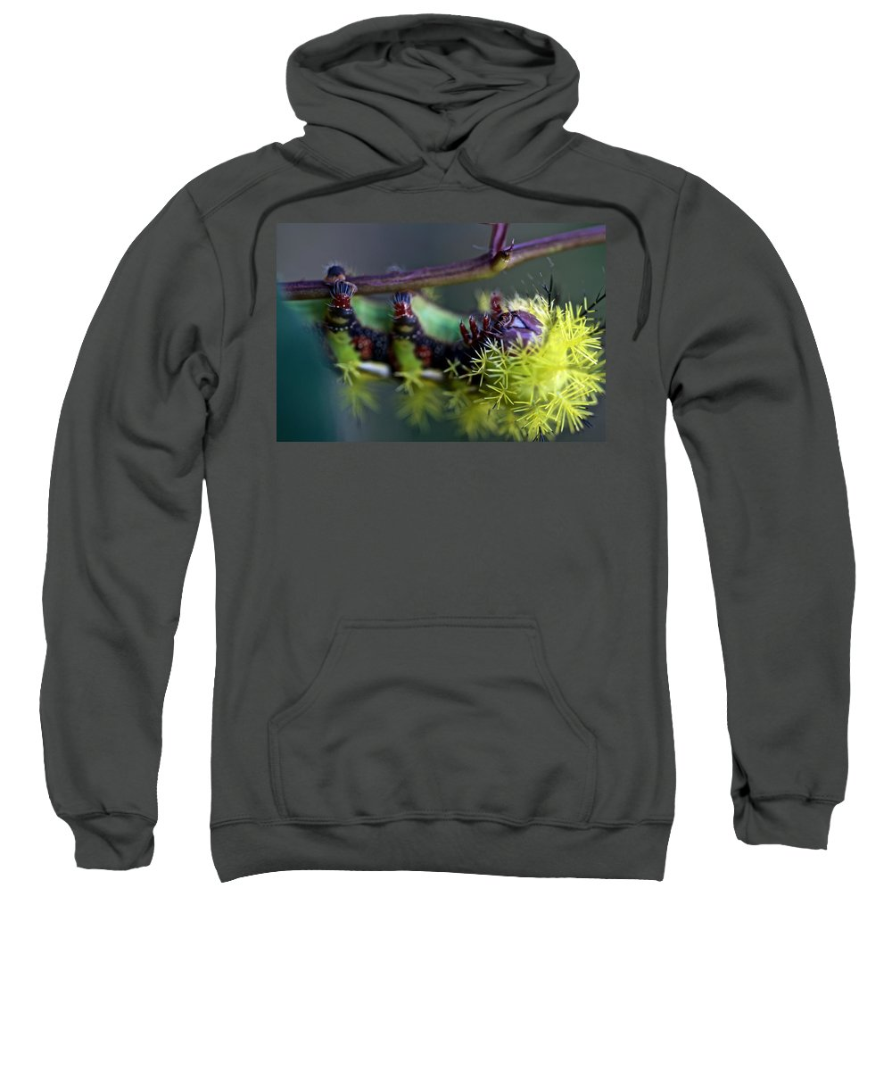 Animals Sweatshirt featuring the photograph Azotador by David Resnikoff