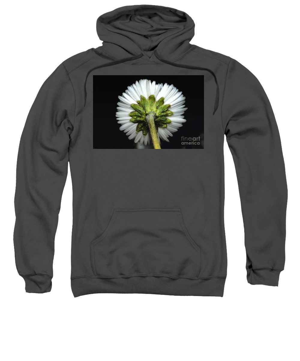 Flower Sweatshirt featuring the photograph Backside Of A Daisy Flower by Mats Silvan