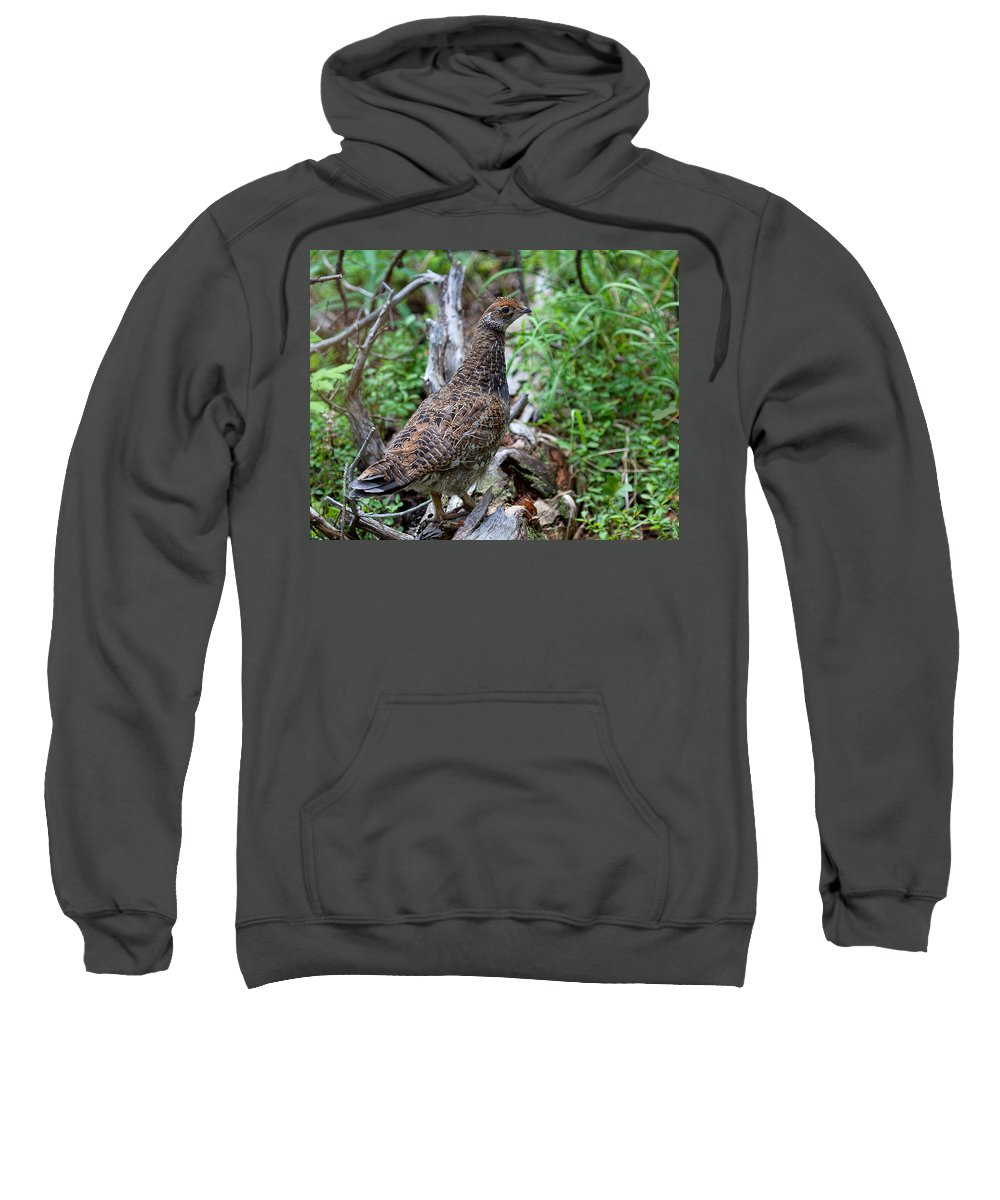 Blue Grouse Photograph Sweatshirt featuring the photograph Backwoods Traveler by Jim Garrison