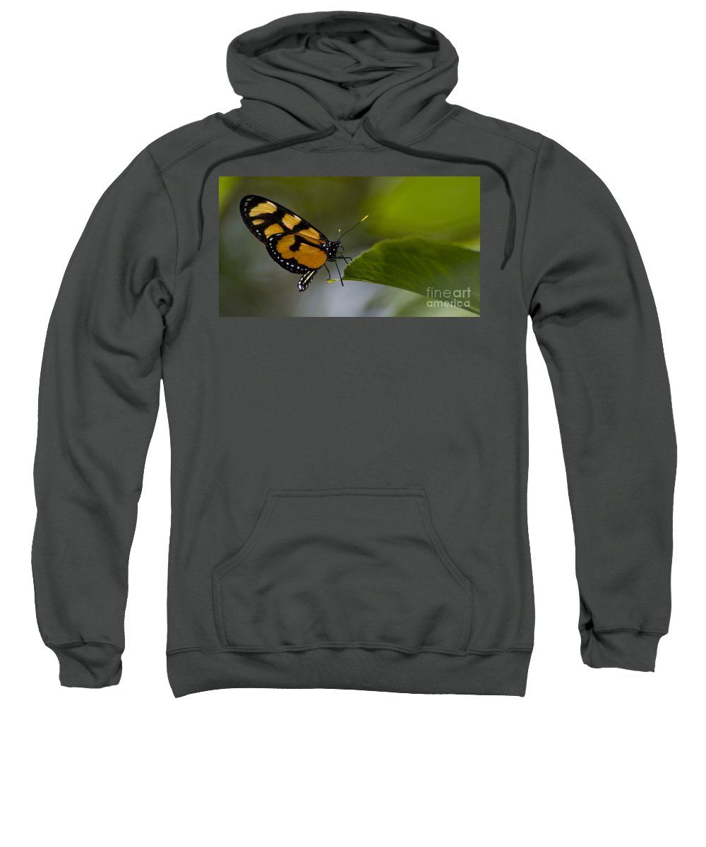 Butterfly Sweatshirt featuring the photograph Balancing Act by Heather Applegate