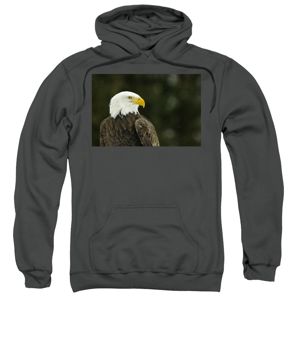 Bird Of Prey Sweatshirt featuring the photograph Bald Eagle In Ecomuseum Zoo by Steeve Marcoux