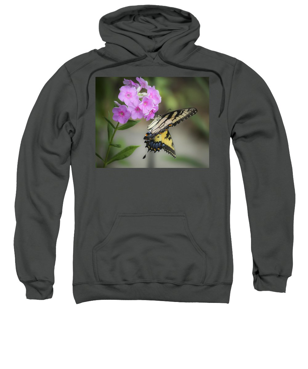 Phlox Sweatshirt featuring the photograph Beautiful Butterfly by Teresa Mucha