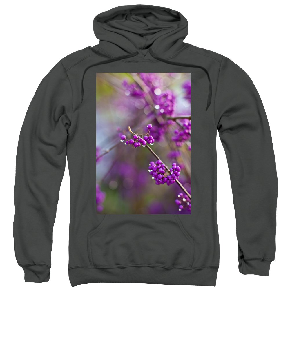 Beauty Berry Sweatshirt featuring the photograph Beauty Berry Explosion by Mike Reid
