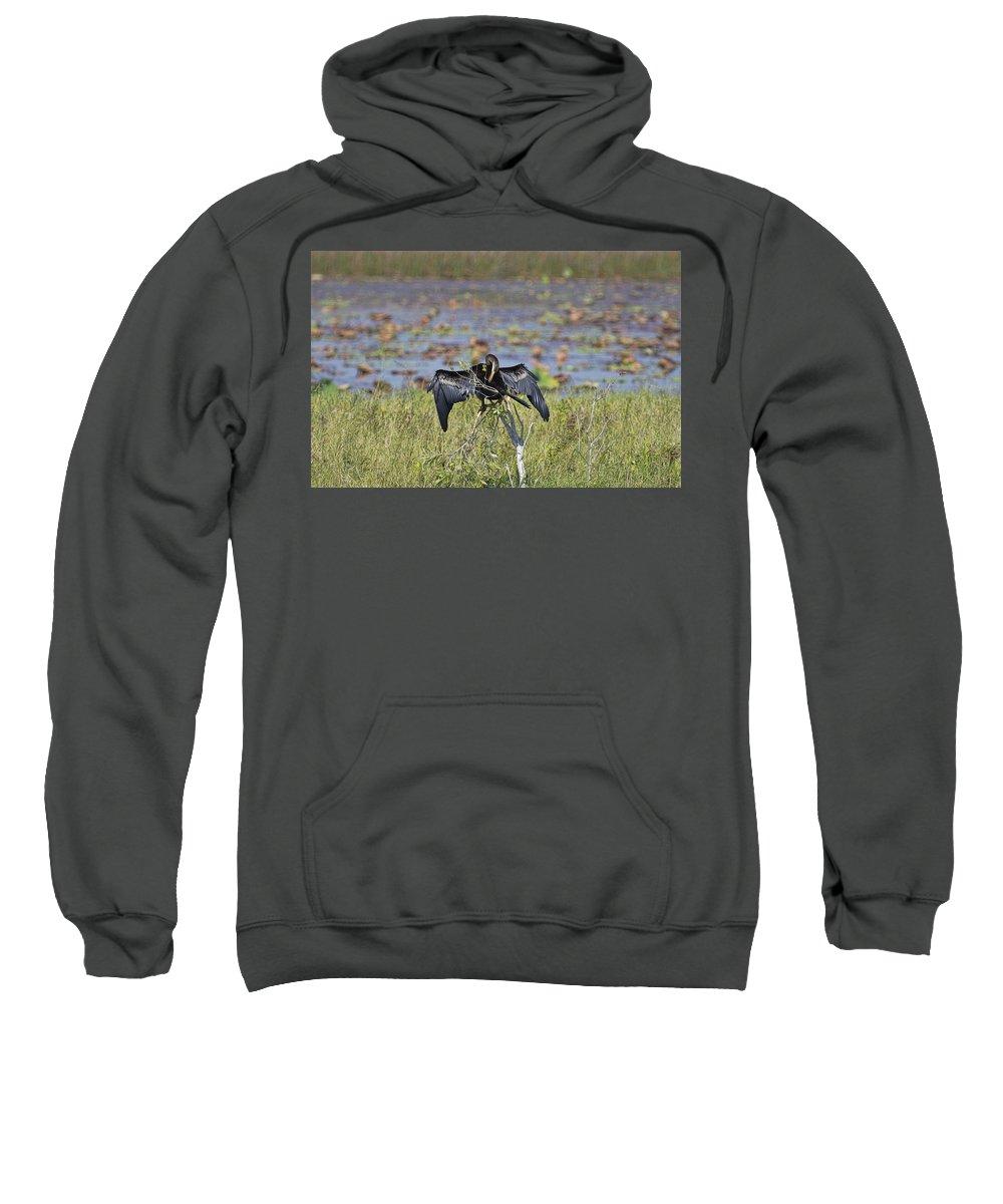 Cormorant Sweatshirt featuring the photograph Billabong V6 by Douglas Barnard