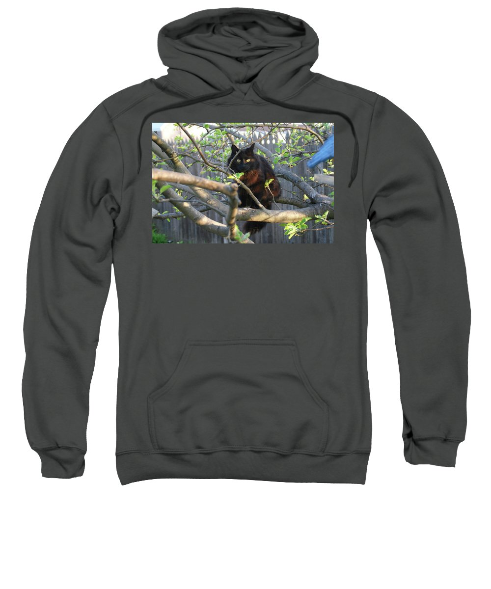 Cat Sweatshirt featuring the photograph Birding 0052 by Guy Whiteley