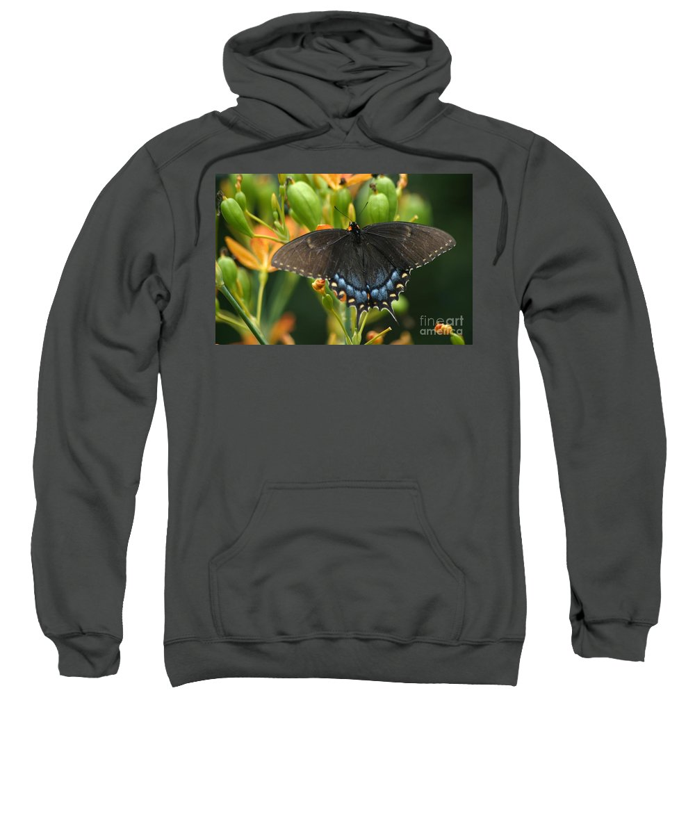 Butterfly Sweatshirt featuring the photograph Black Swallowtail by Living Color Photography Lorraine Lynch