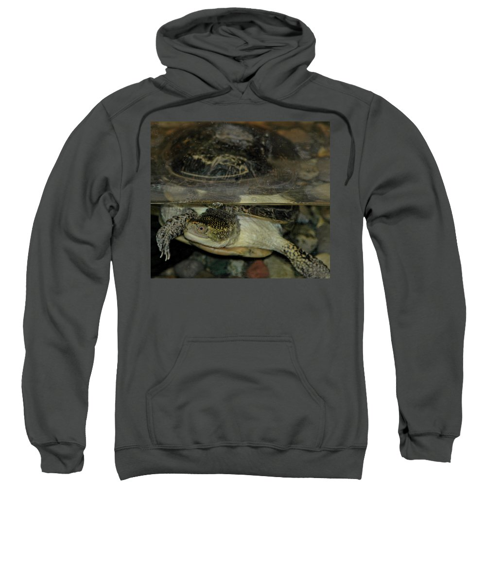 Usa Sweatshirt featuring the photograph Blandings Swimming Turtle by LeeAnn McLaneGoetz McLaneGoetzStudioLLCcom
