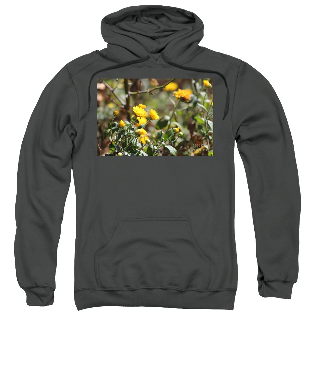 Merigolds Sweatshirt featuring the photograph Blomming Merigolds by Michelle Powell