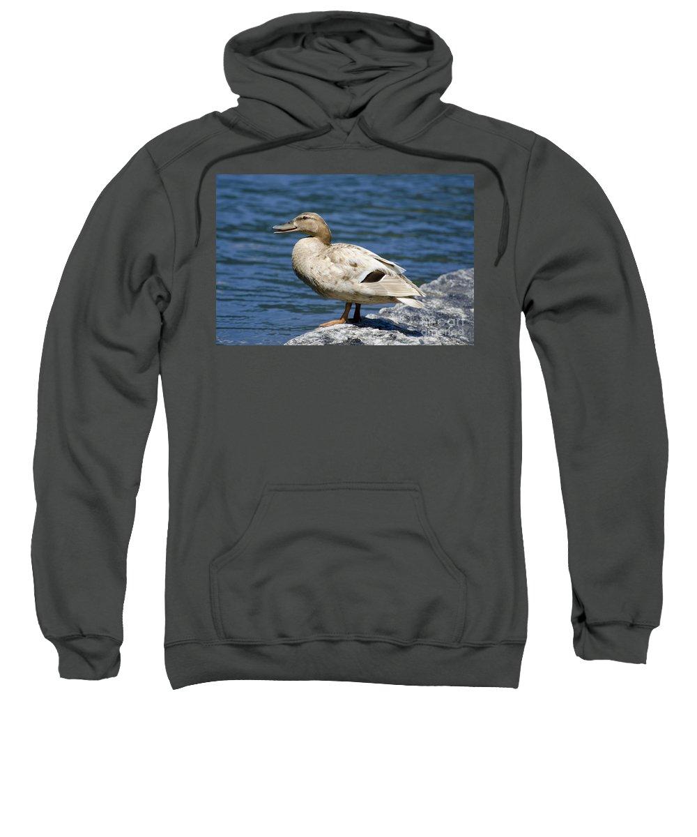 Duck Sweatshirt featuring the photograph Blond Duck by Mats Silvan