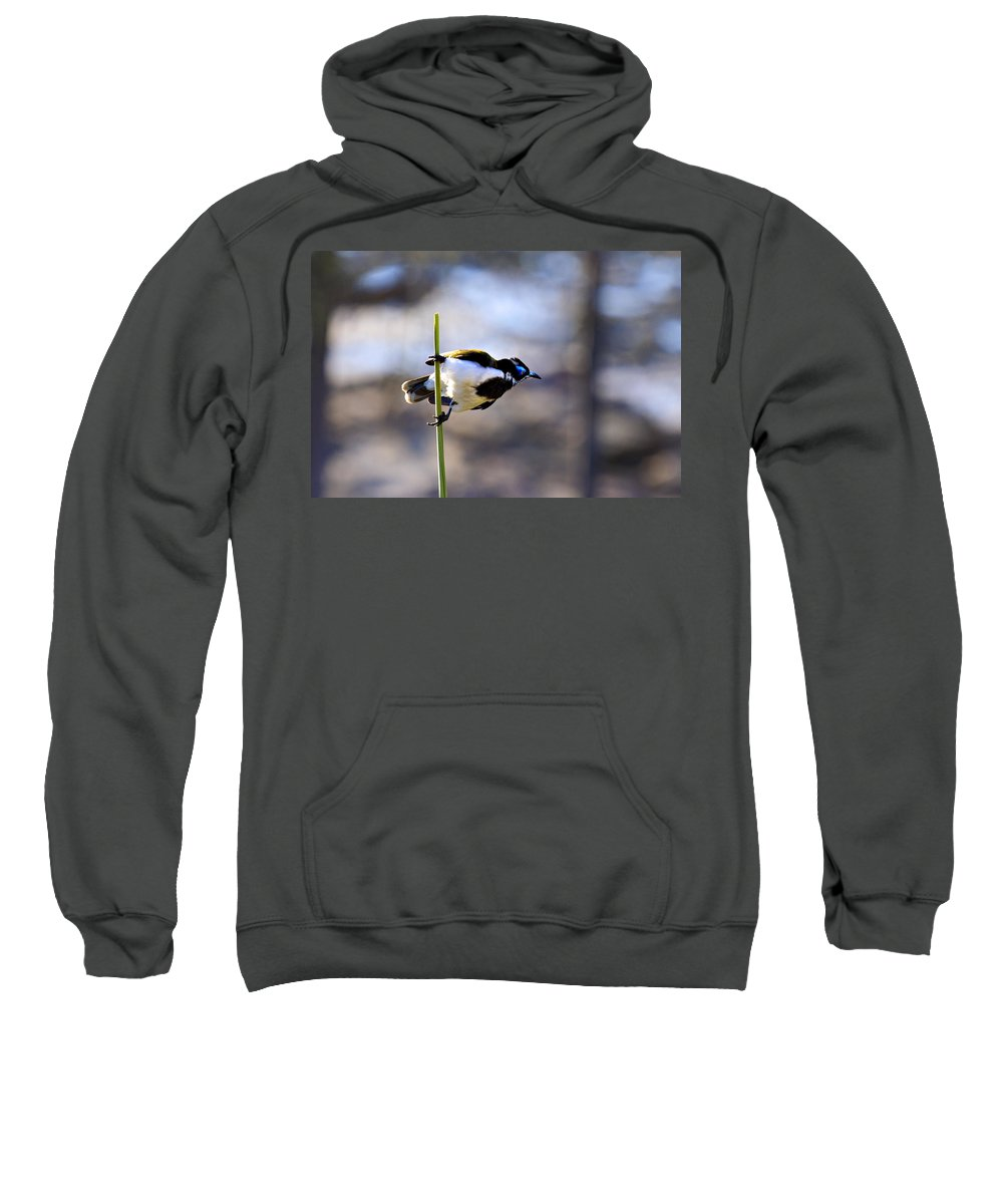 Blue Faced Honey Eater Sweatshirt featuring the photograph Blue Faced Honey Eater V3 by Douglas Barnard