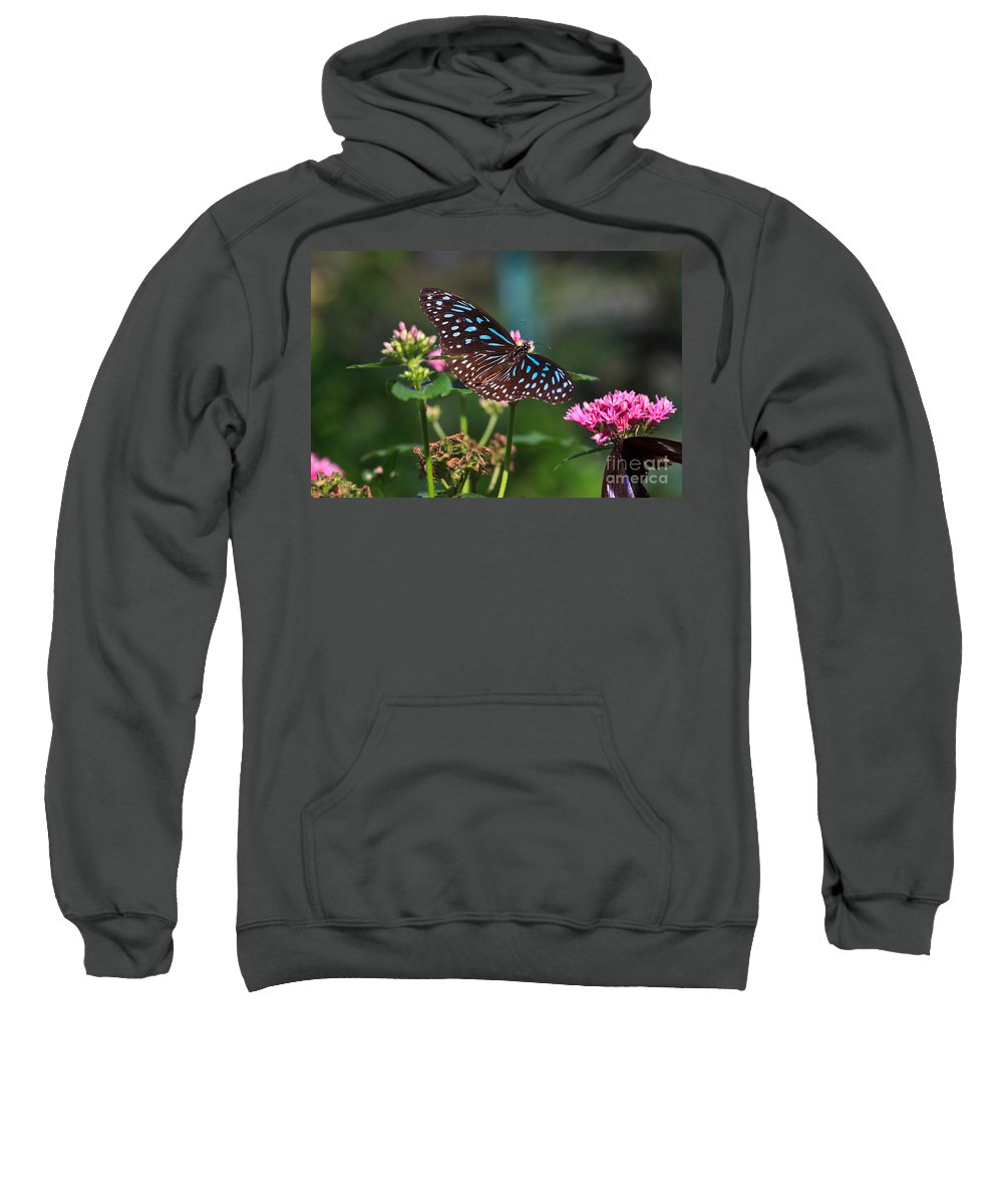 Blue Sweatshirt featuring the photograph Blue Glassy Tiger Butterfly by Louise Heusinkveld