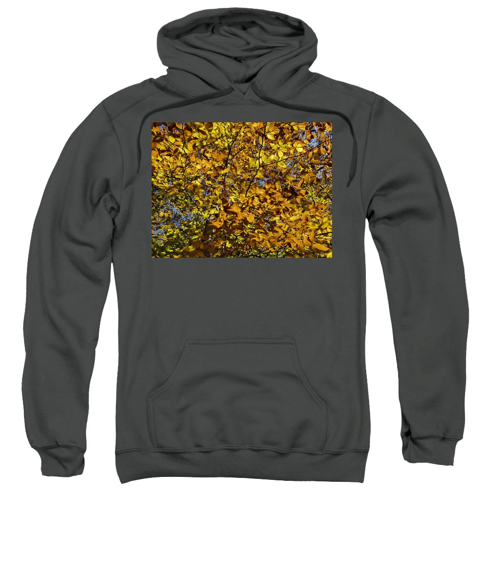 Fall Sweatshirt featuring the photograph Branches Of Gold by Jo-Anne Gazo-McKim